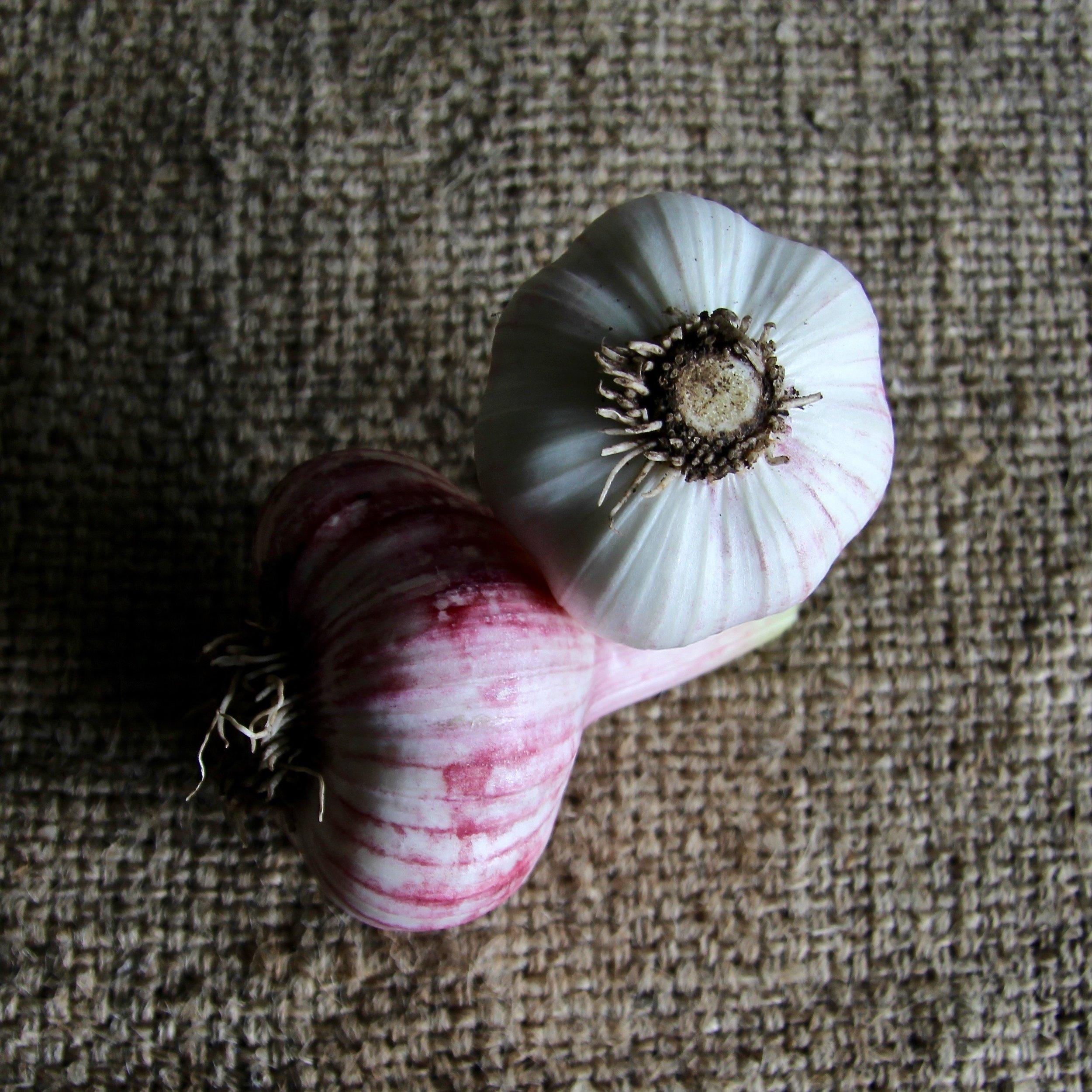 Garlic 2.jpg