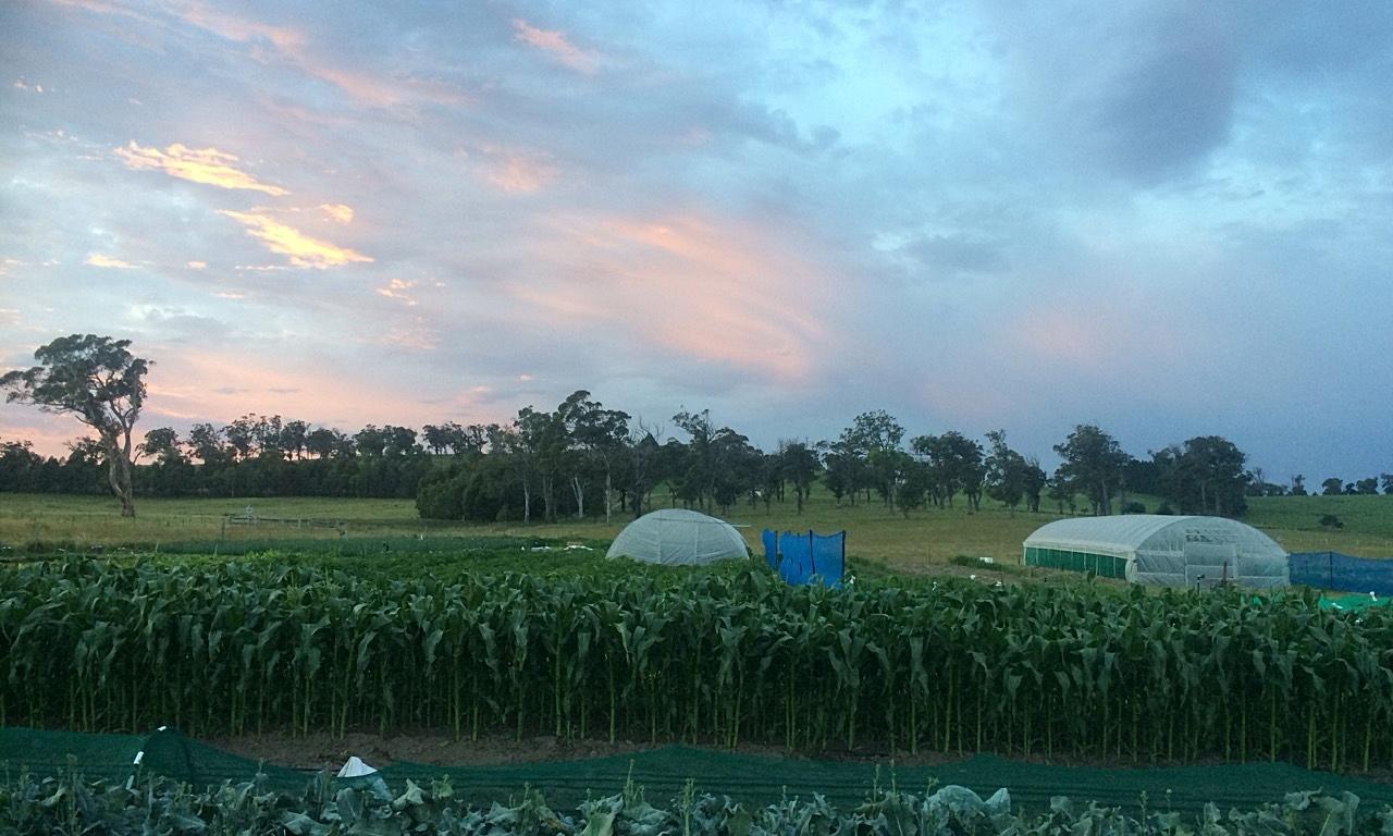 Farm at Sunrise.jpg