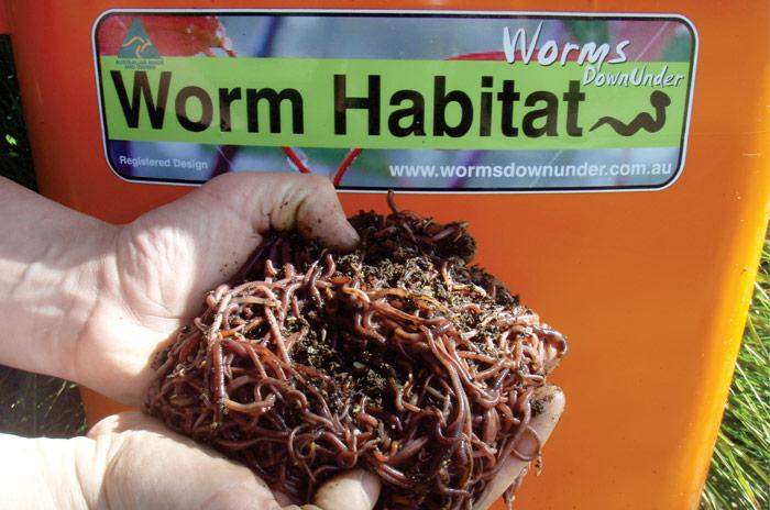 Worms from wormsdownunder.com.au