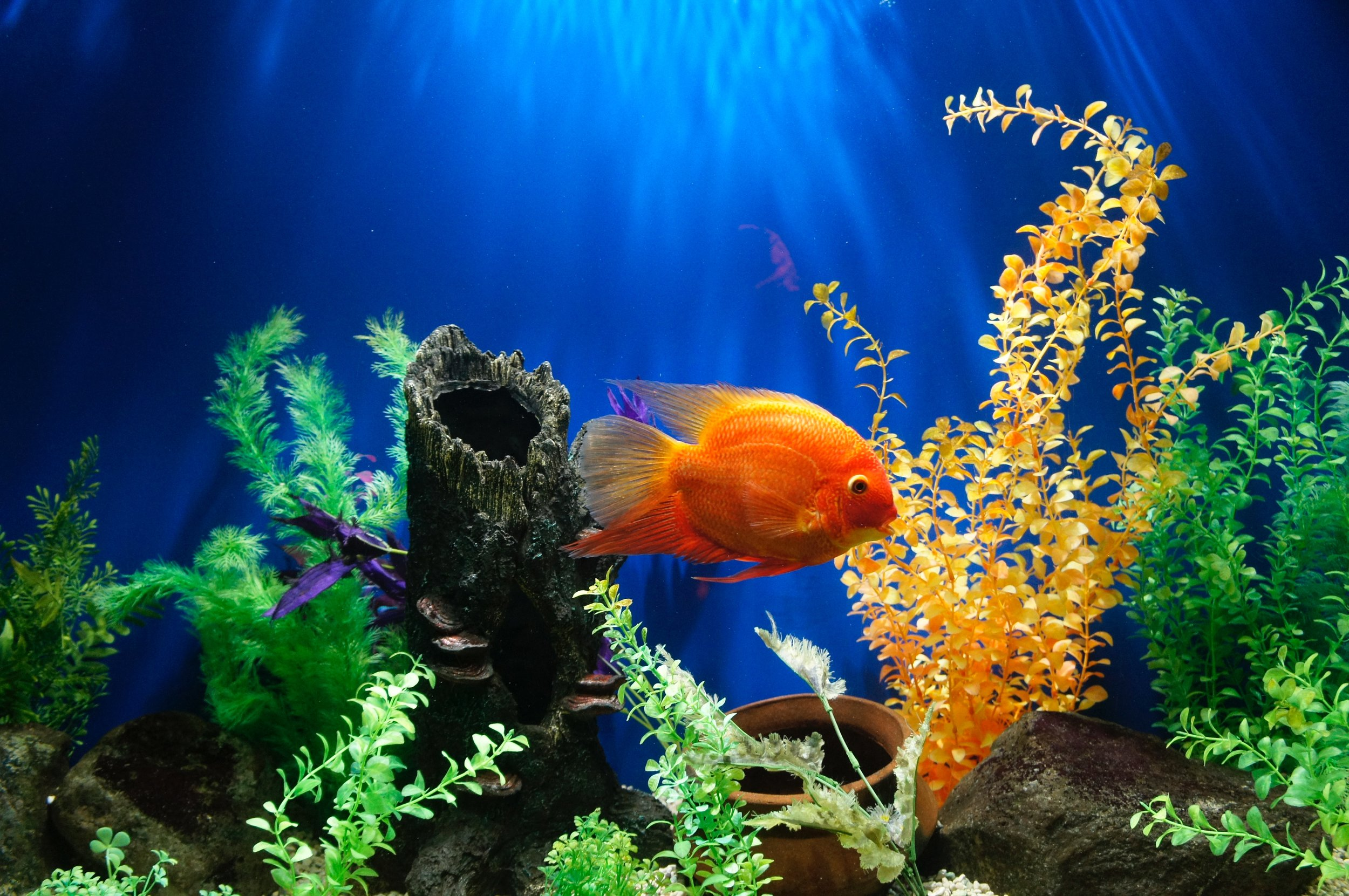 Fish sicknesses