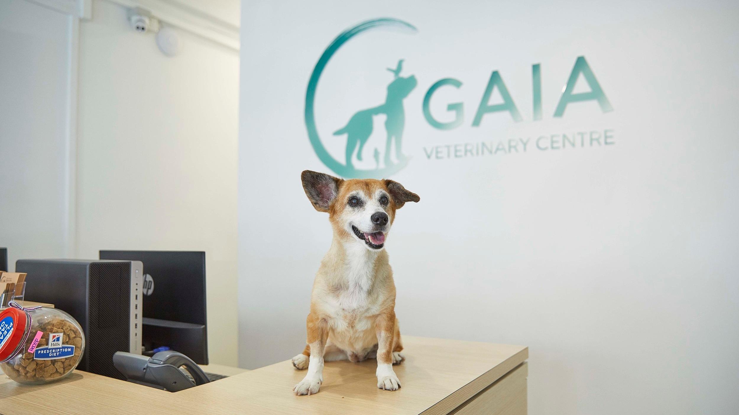 Gaia+Veterinary+Centre.jpg
