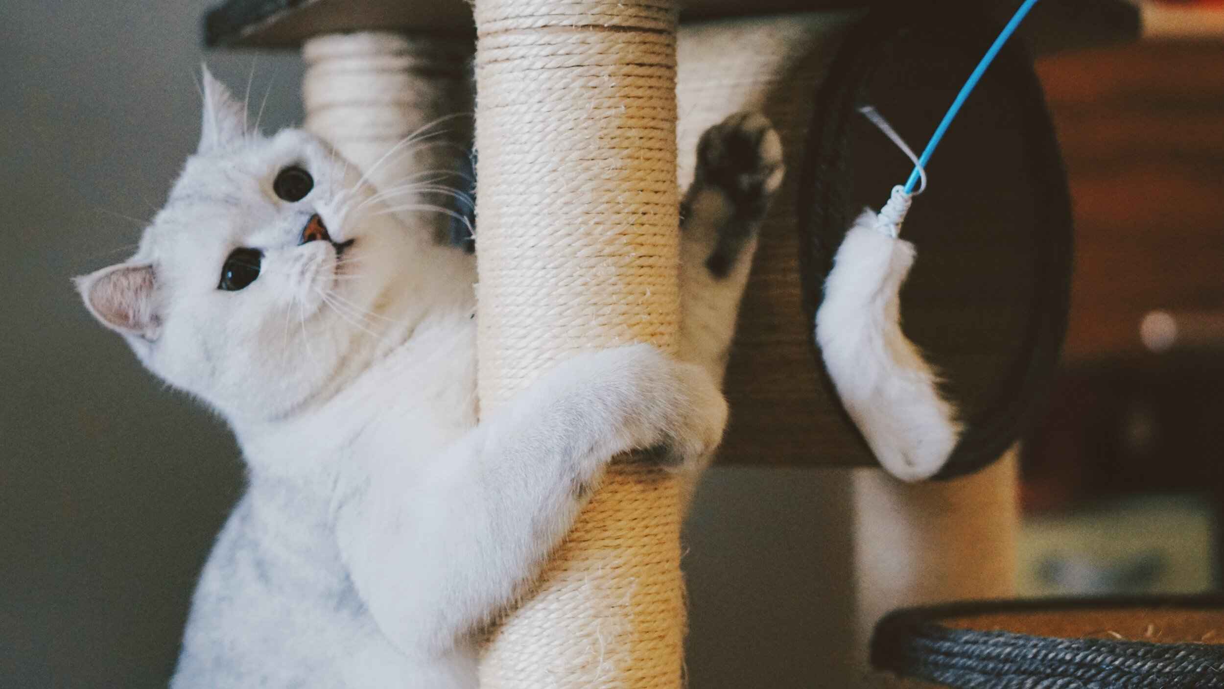 Scratch poles helps file down nails and lets your cat mark her territory.