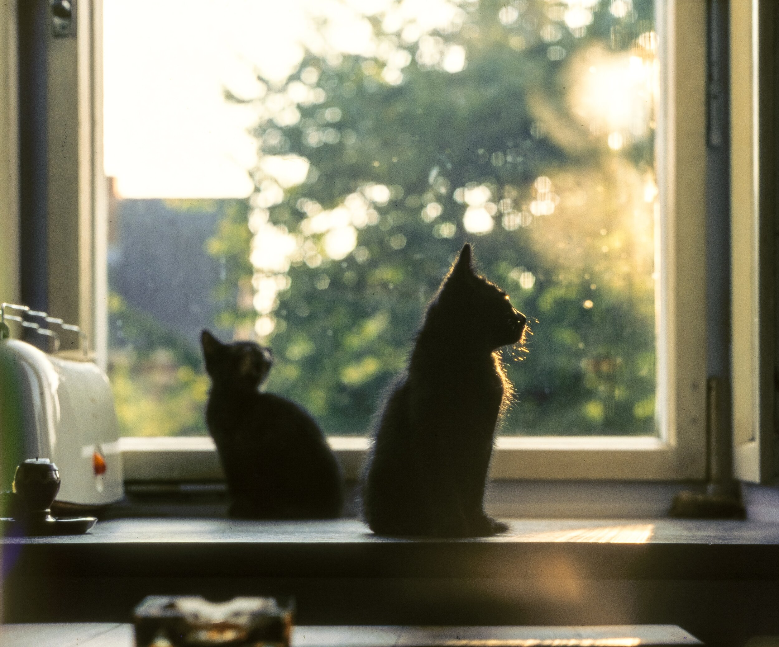 Windows are TVs for cats. Just more real life than reel life.