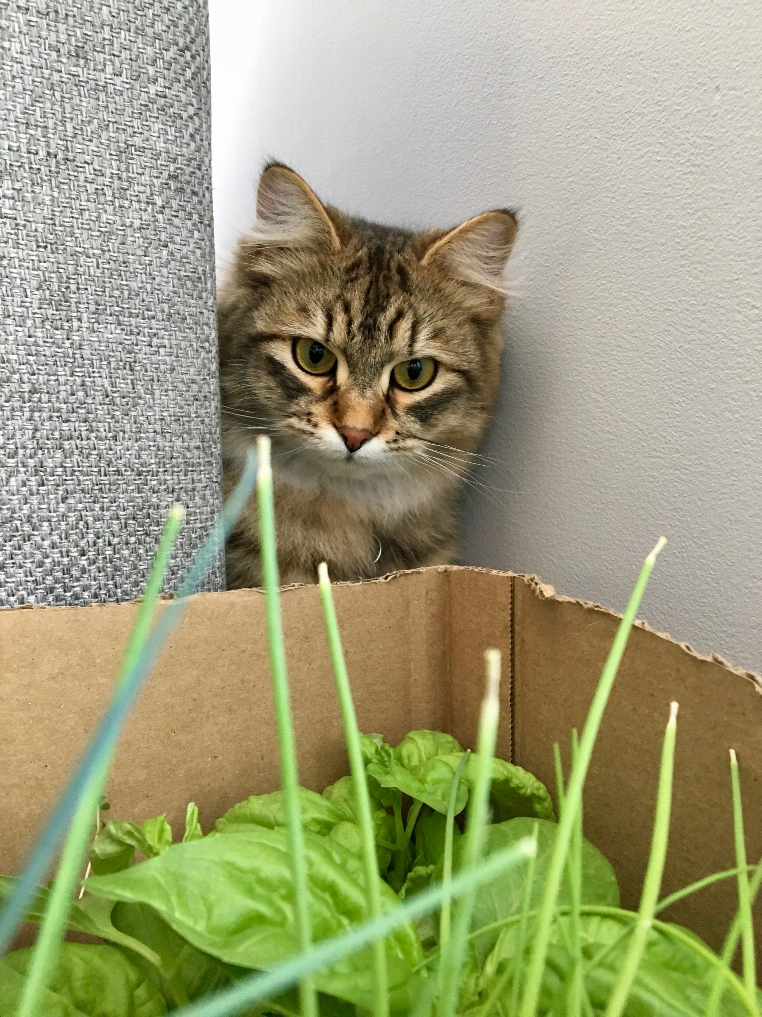 Plants make good natural hiding spots for cats. Just make sure they are not poisonous.