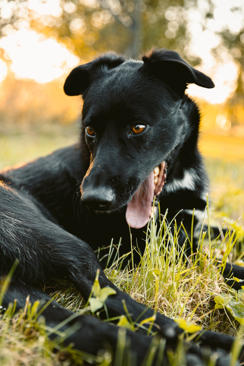 Chronic Kidney Disease Gaia Vets Learn More About Your Pets