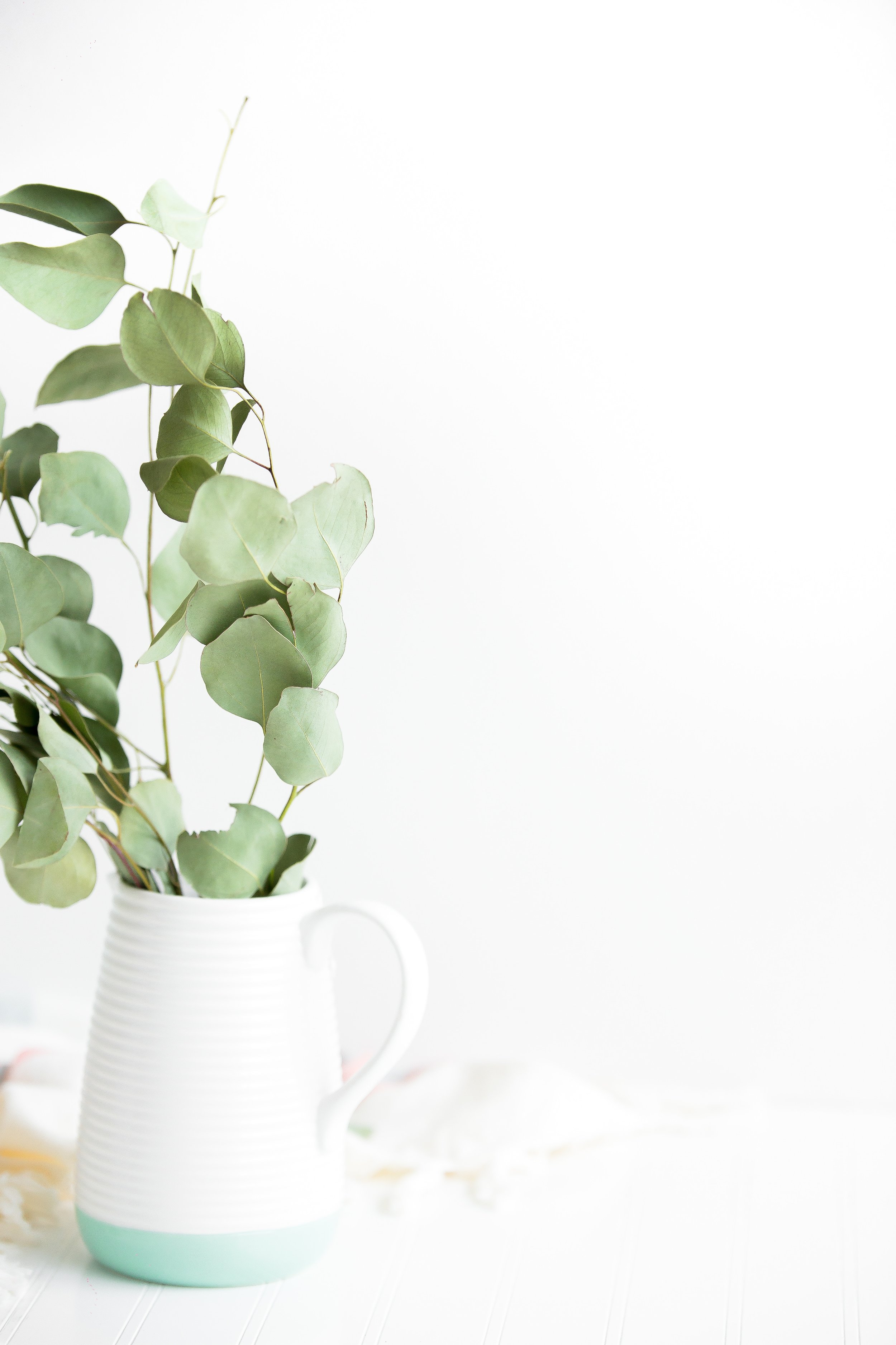 where to buy eucalyptus branches