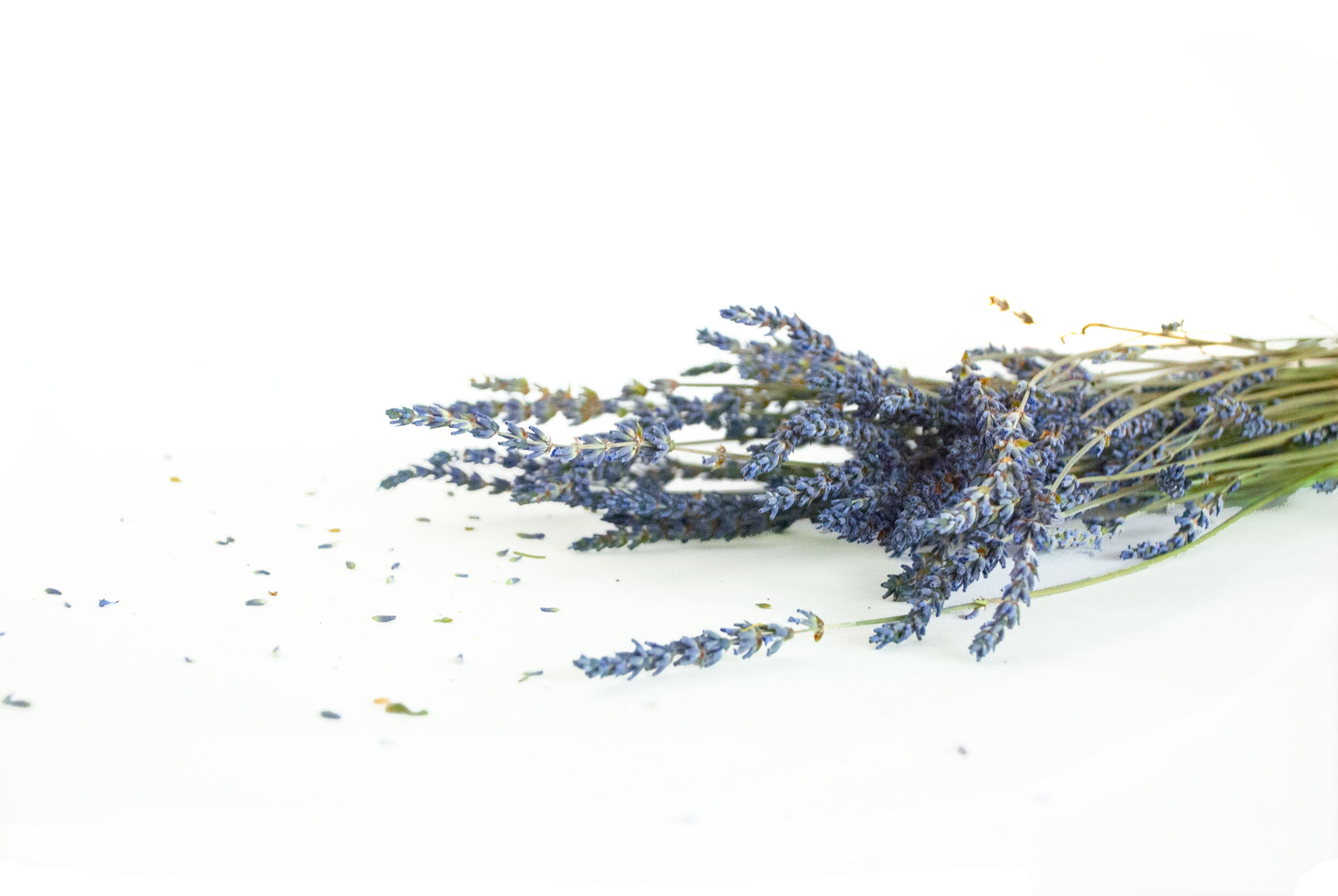 Lavender is one of our favorite plants for its calming scent.