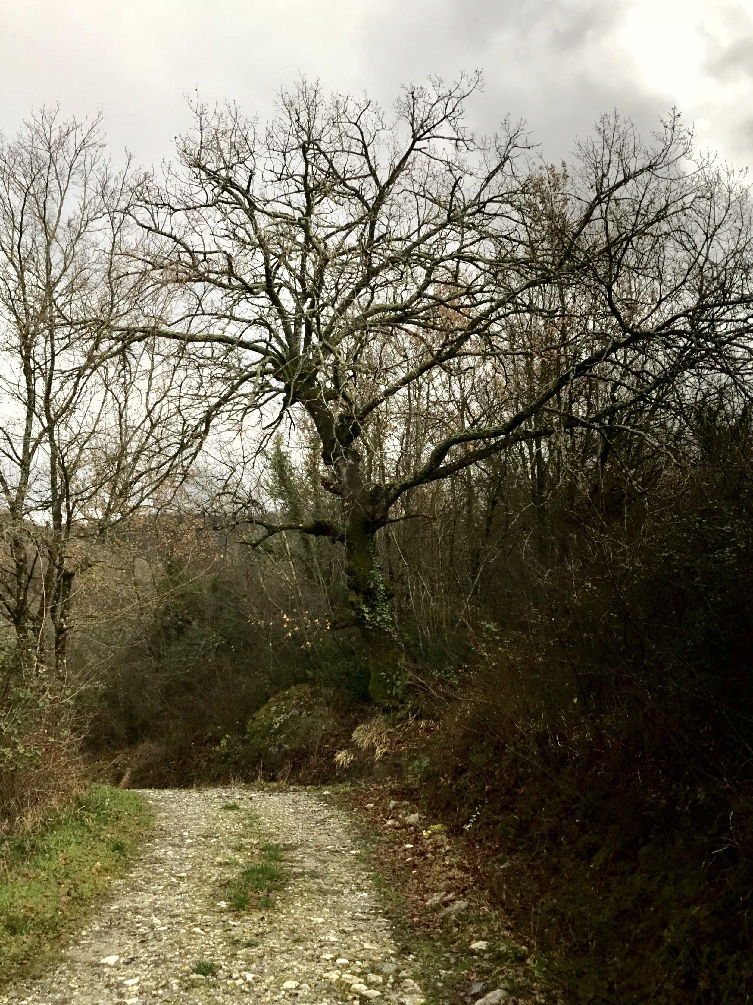 Bianca is guarded by a lovely oak as you come up the drive…
