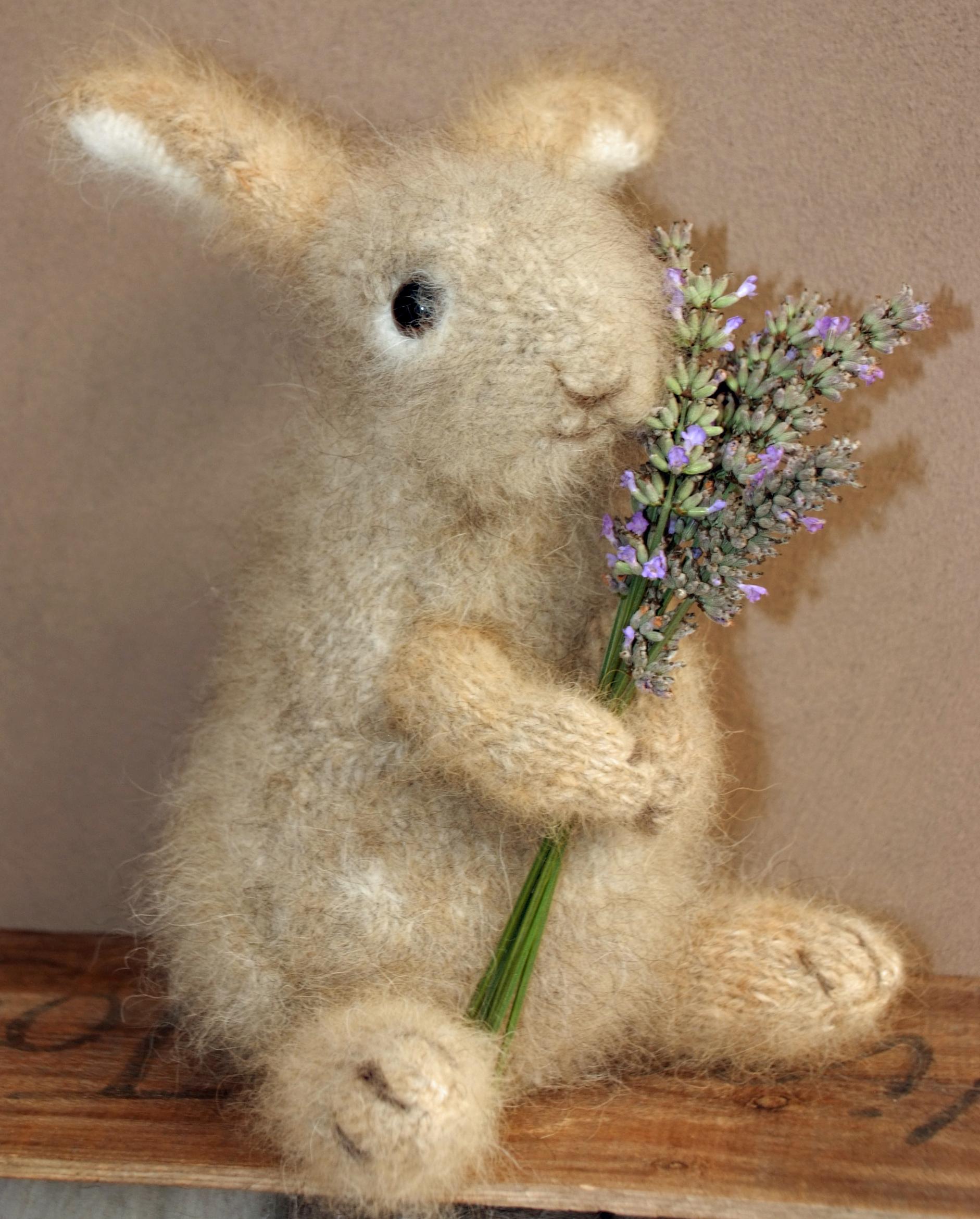 wild rabbit  best.jpg
