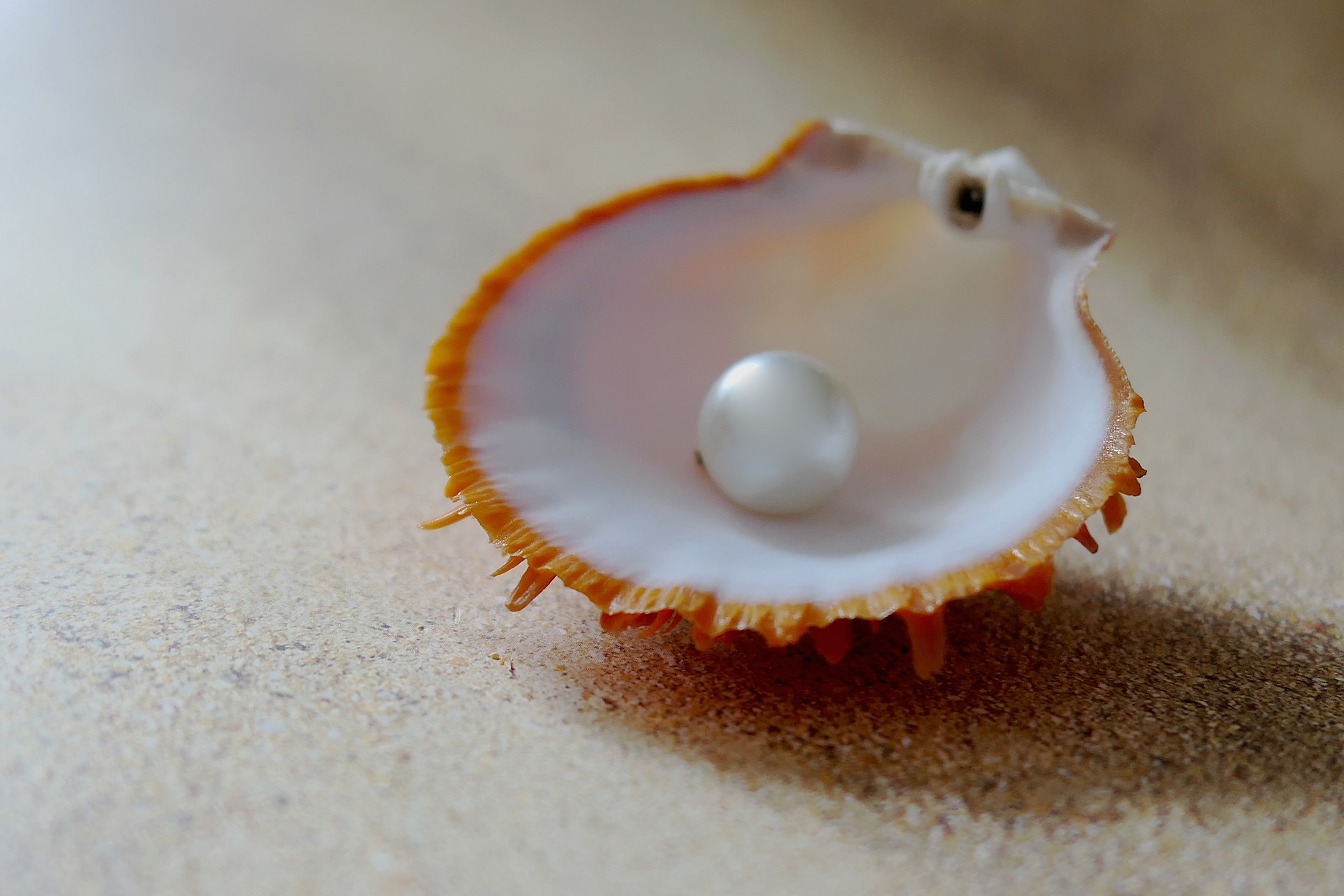 pearls_shell.jpg