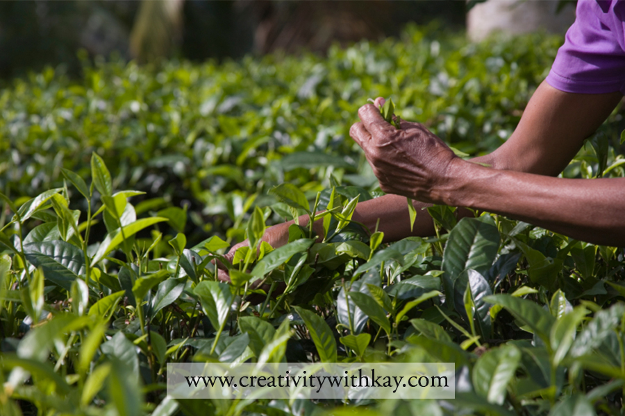 qatar-travel-blogger-khansa-tea-plantation-nuwara-eliya-teapicking-srilanka.jpg