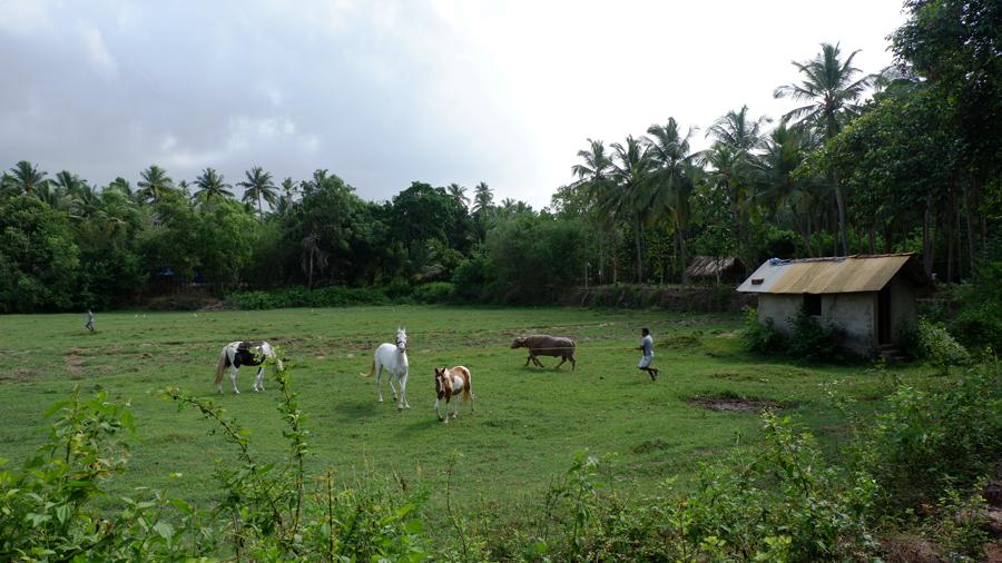 alila-diwa-goa-horse-farm.jpg