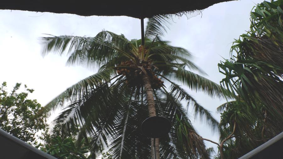 Kandolhu_Coconuts.jpg