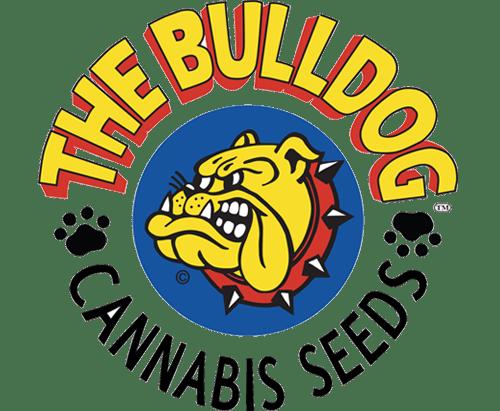 the-bulldog_2.png