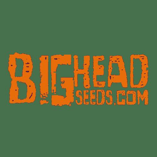 big-head.png