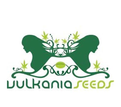 Vulkania-Seeds_3.png