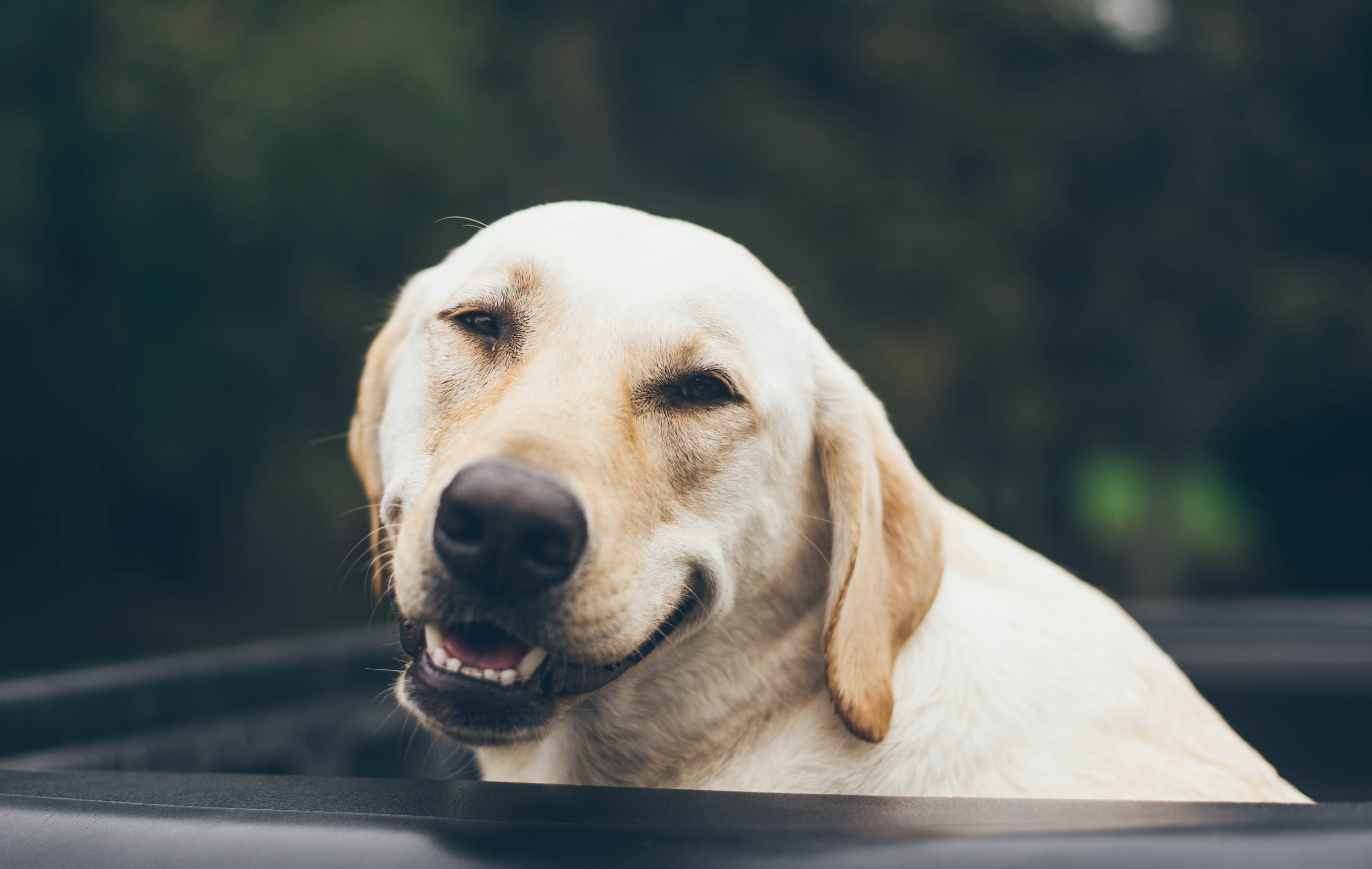 CBD for Pets -