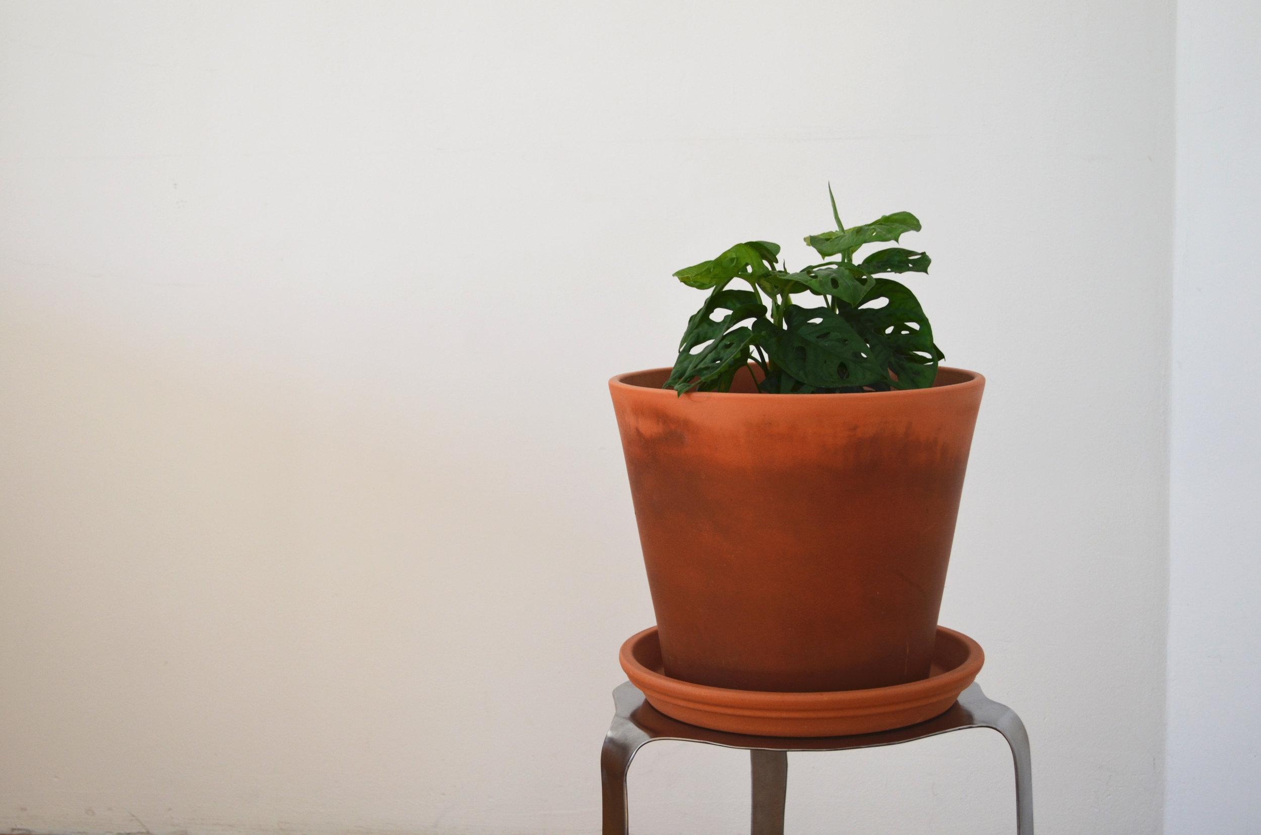 keverkruk met gatenplant 2.jpg