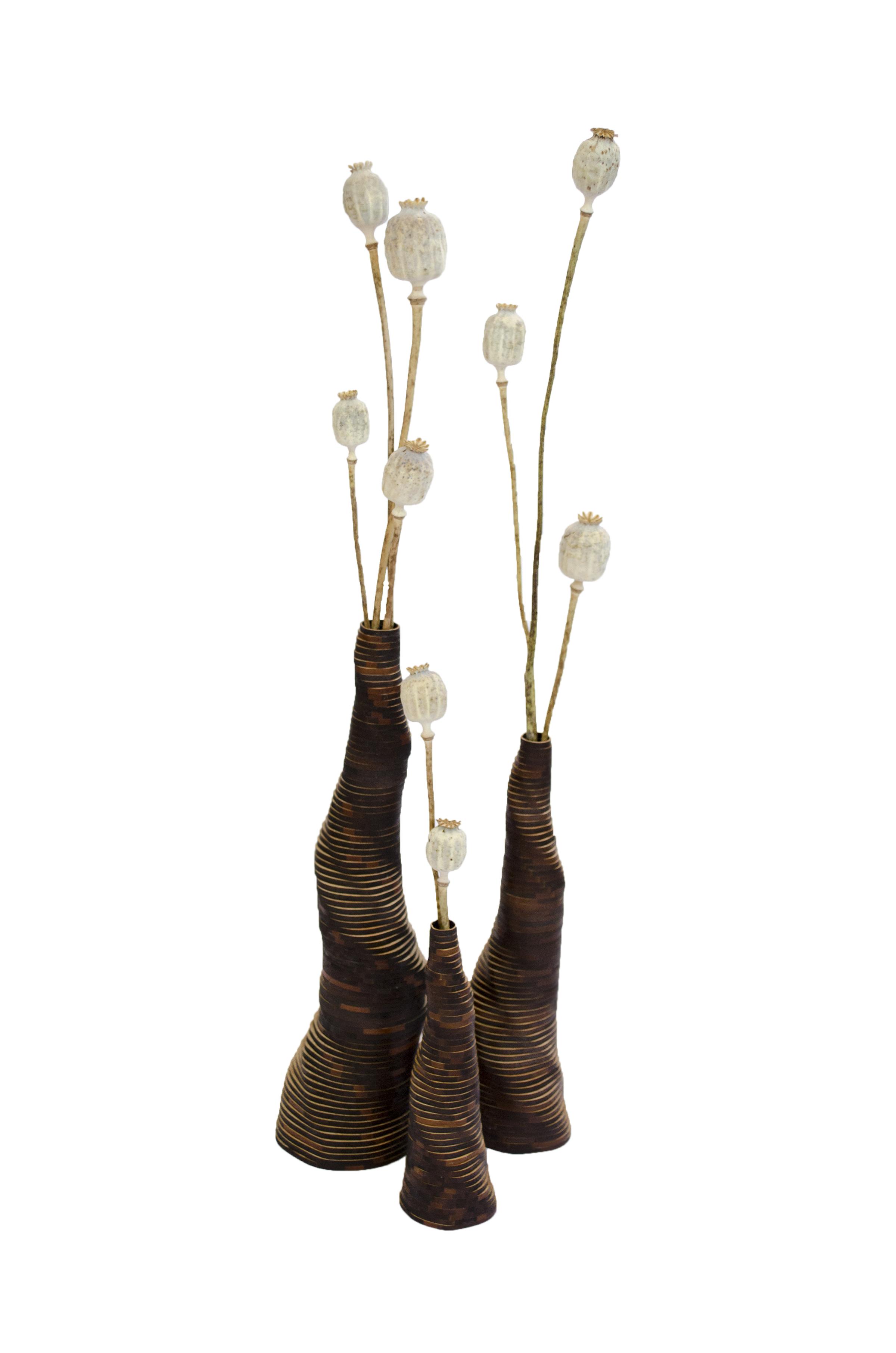 - Stratum Tempus - catalogueStratum QuercusBeetlestoolCoatrack n°162