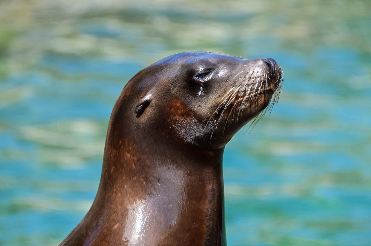 Marine Observation & Conservation