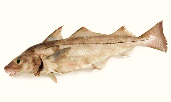 HADDOCK (Gutted)    Format:  Fresh   Size Grade:  0-300g | 300-500g | 500-700g | 700g-1kg | 1-1.5kg | 1.5kg+   Notes:  Rounded Haddock also available