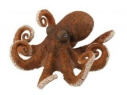 OCTOPUS    Format:  Fresh   Size Grade:  Mixed sizes all in (mostly 100g/ 300g)