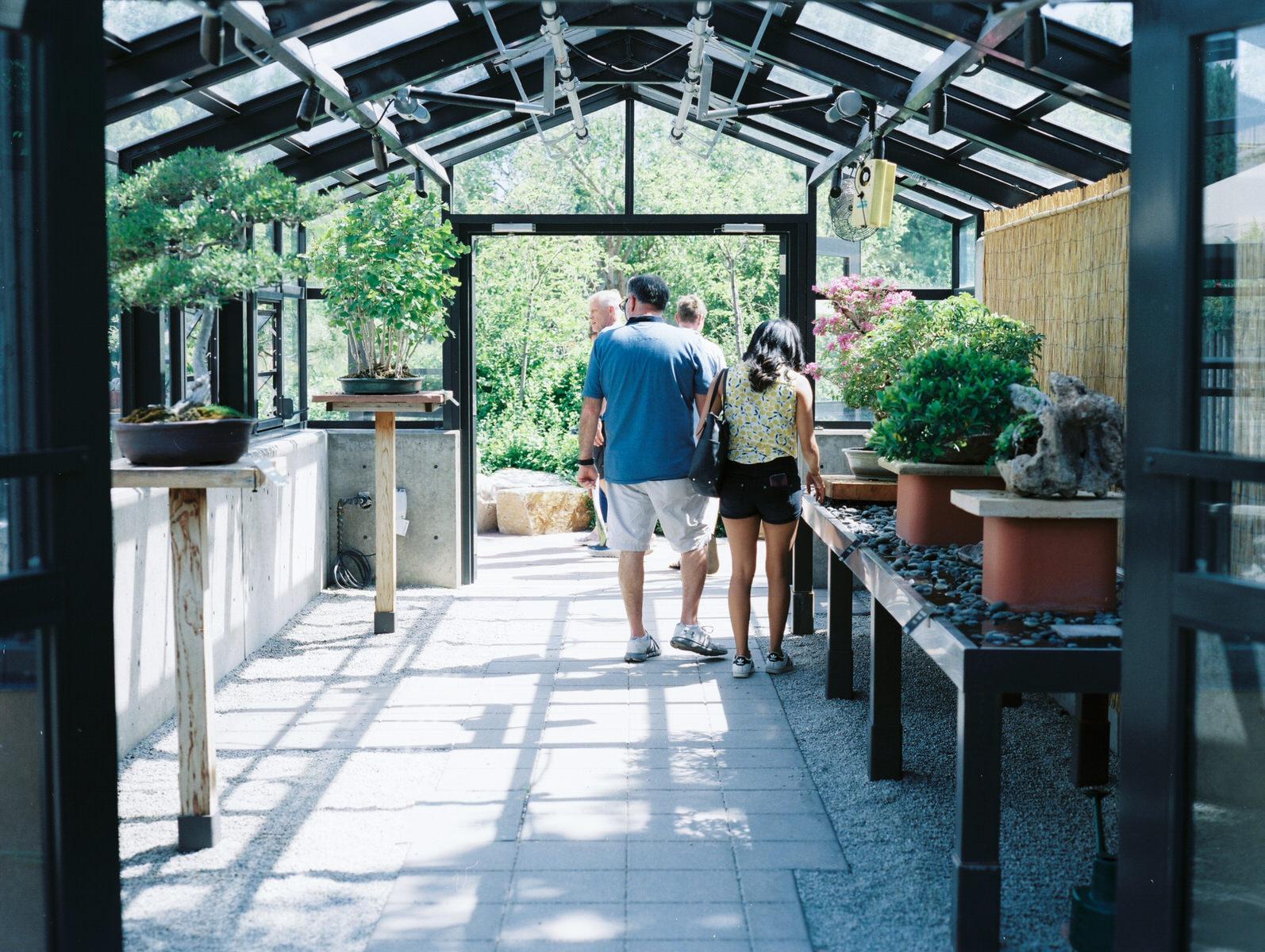 This mini green house had incredible bonsais!