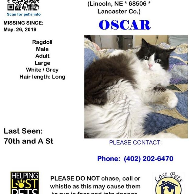 My sweet Oscar sneaked out this morning. He's big, fluffy, and floppy. We miss him dearly. Any help is appreciated