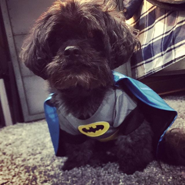 The next Batman ! #doggiestylesbk #spaday #batmanforever #halloweencostume