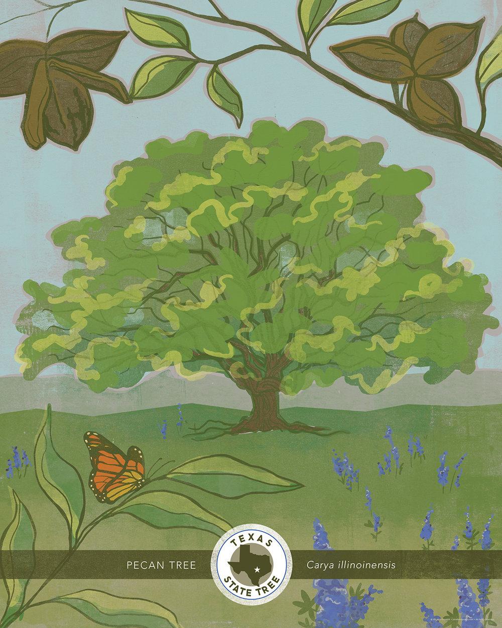 Texas State Tree Illustration Juicebox Designs