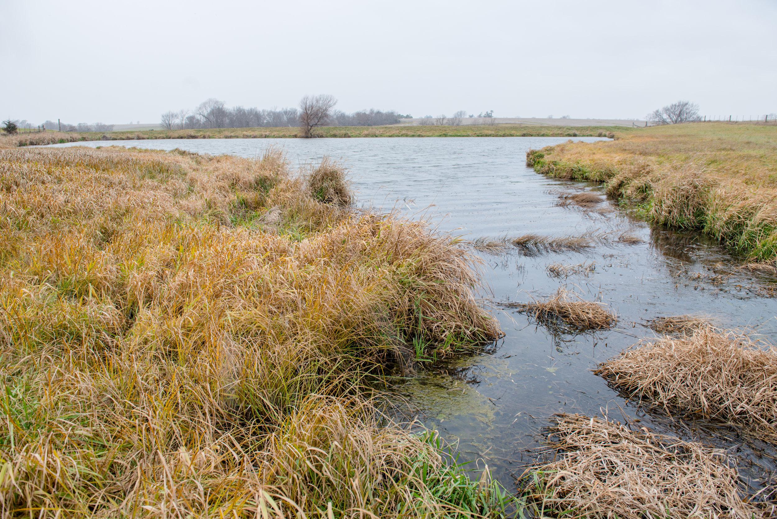 Wetland-8540.jpg