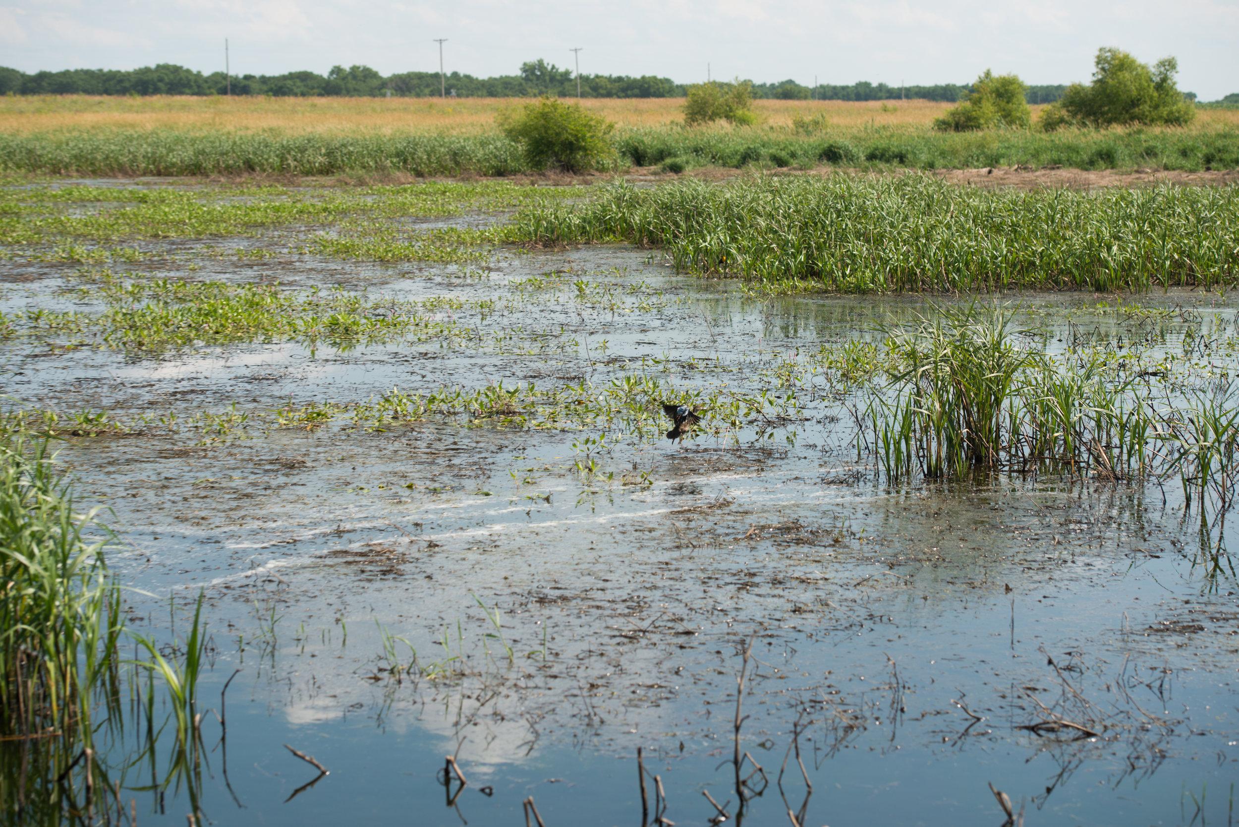 Wetland-2.jpg