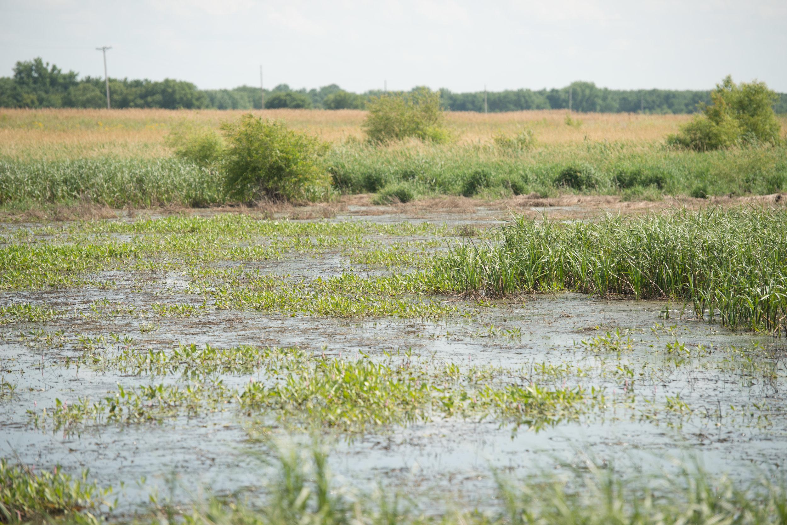 Wetland-2-2.jpg