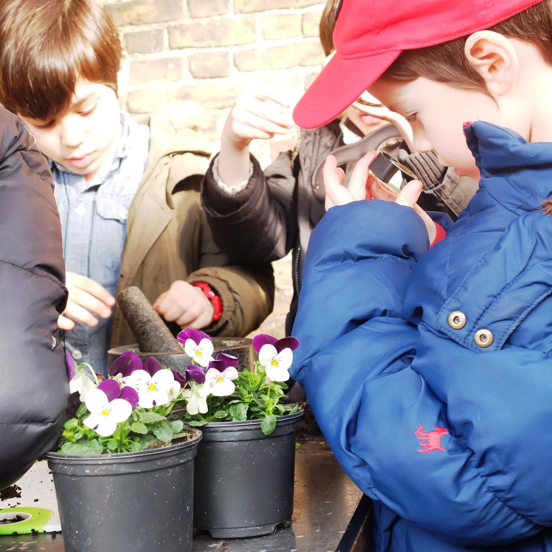 PLANT STUDIES.jpg