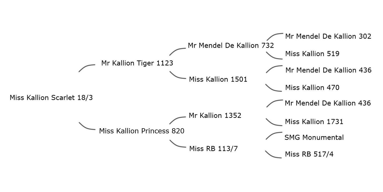 18-3+pedigree.jpg