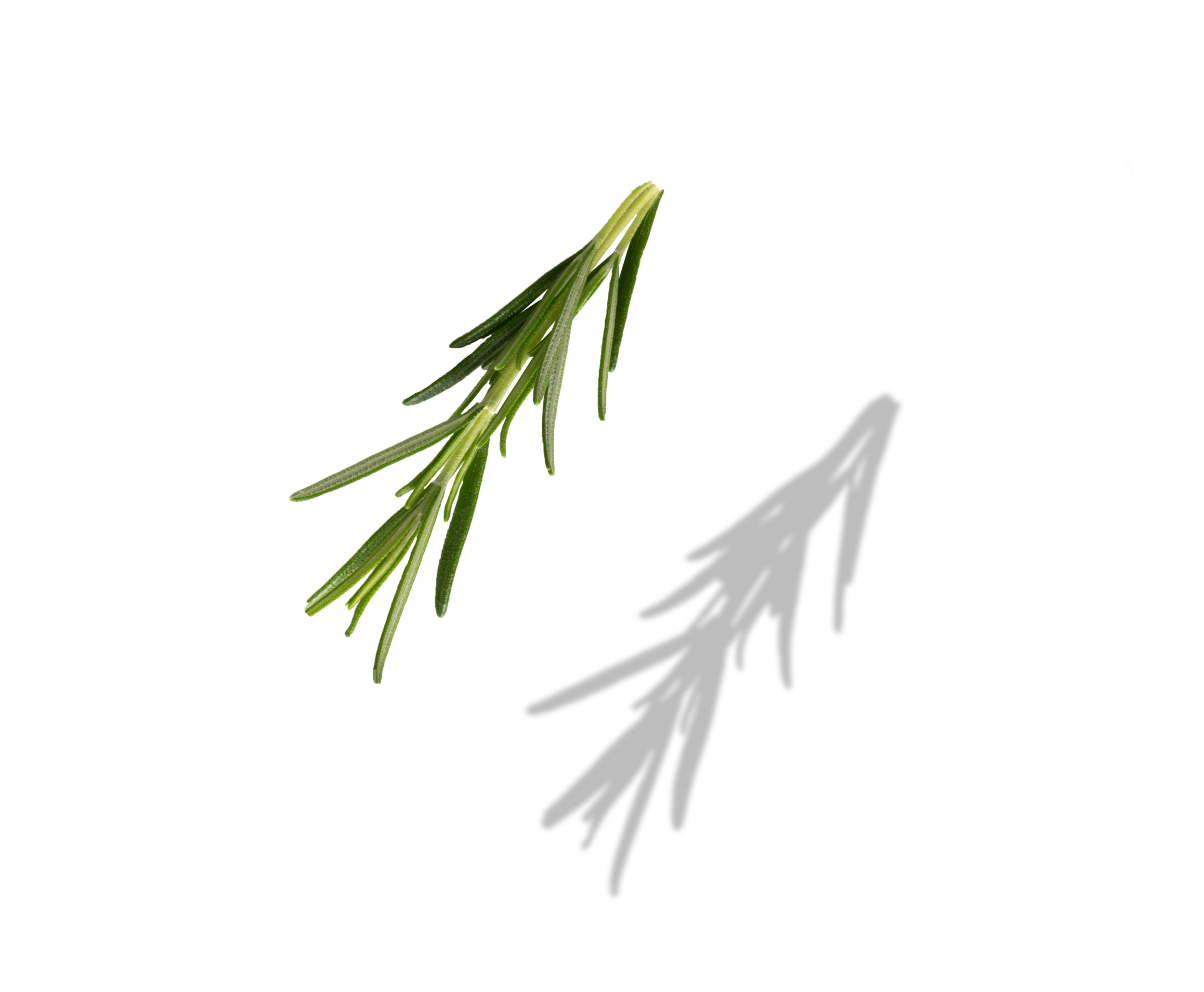 sugarcane copy.png