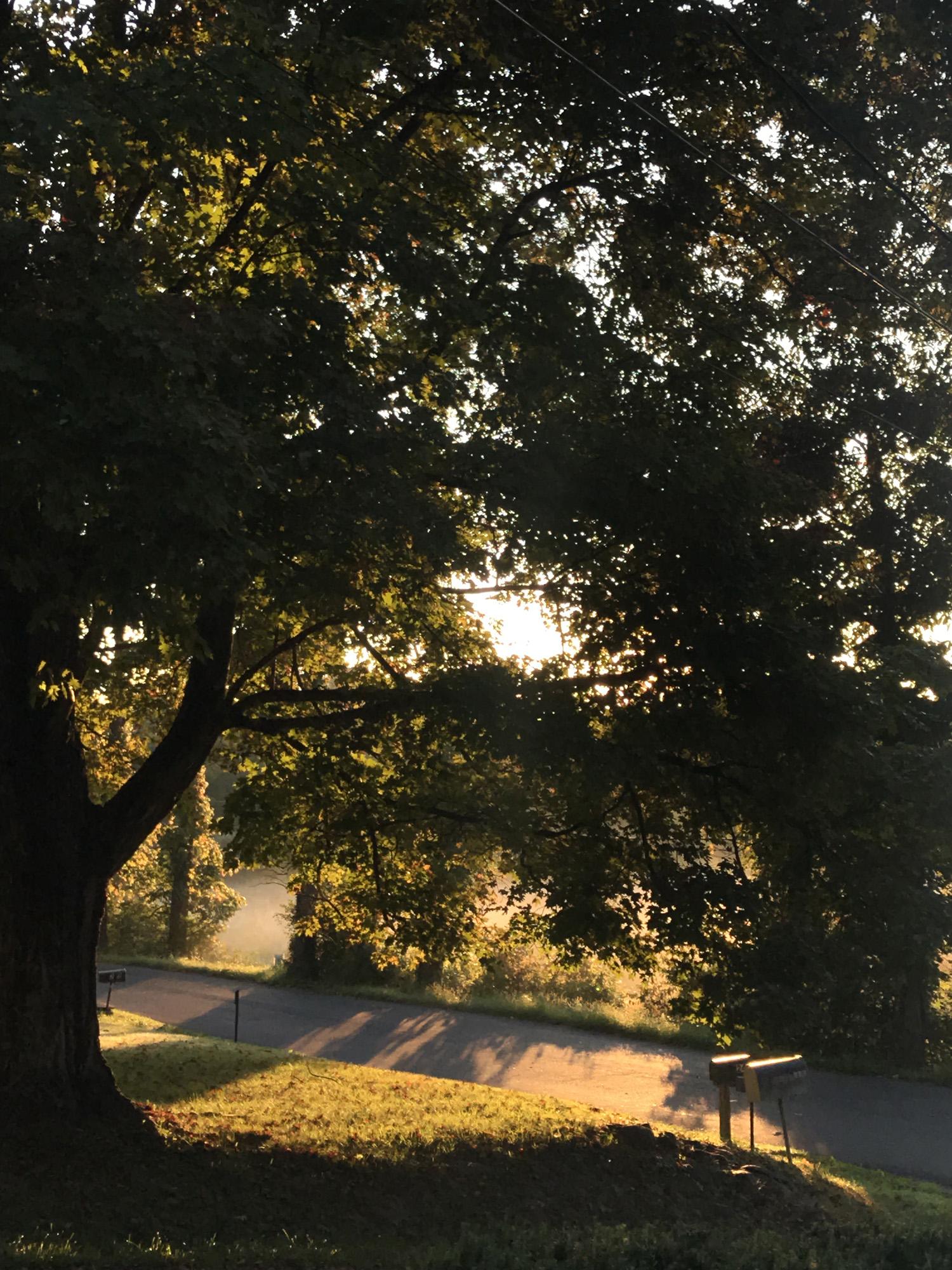 morningtree.jpg