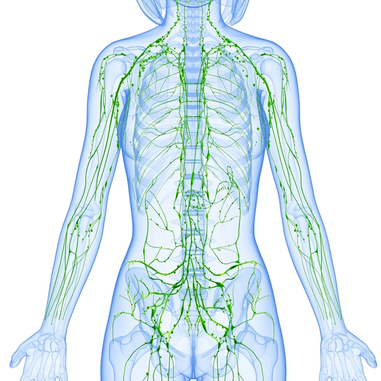MedicalMassageGroup_Lymphatic_System.jpg