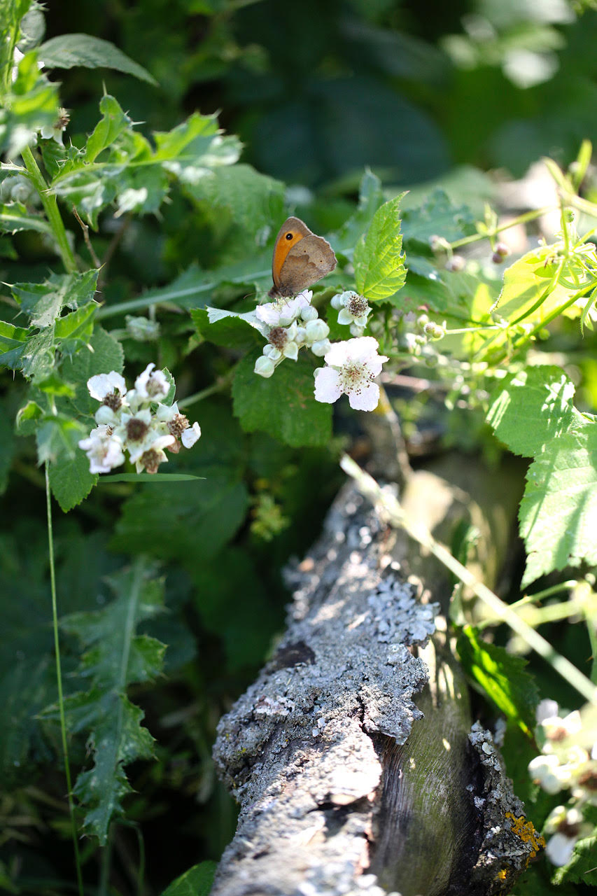 Eden Renewables Pollinator-Friendly Solar Farms 2.jpg