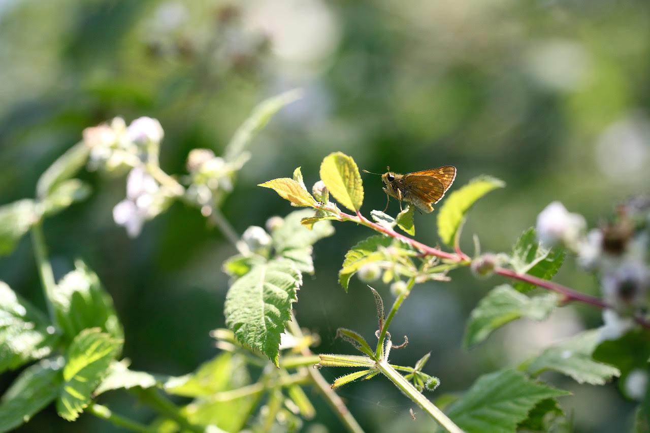 Eden Renewables Pollinator-Friendly Solar Farms 4.jpg