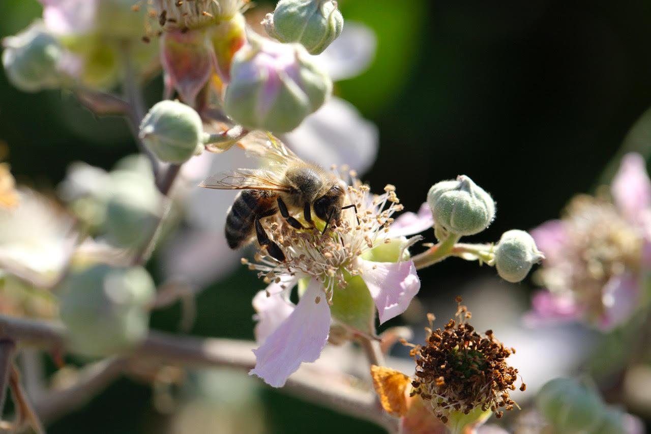 Eden Renewables Pollinator-Friendly Solar Farms 5.jpg