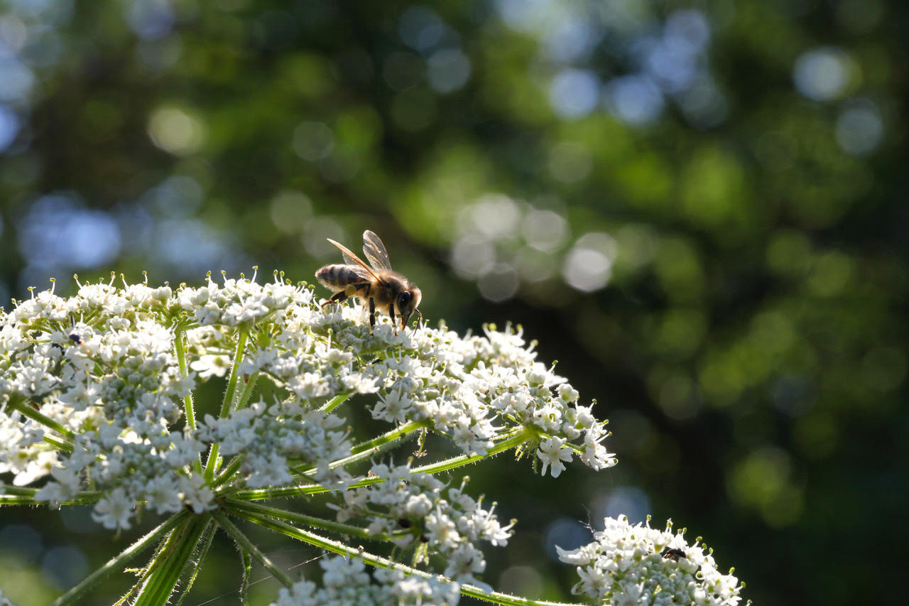 Eden Renewables Pollinator-Friendly Solar Farms 6.jpg