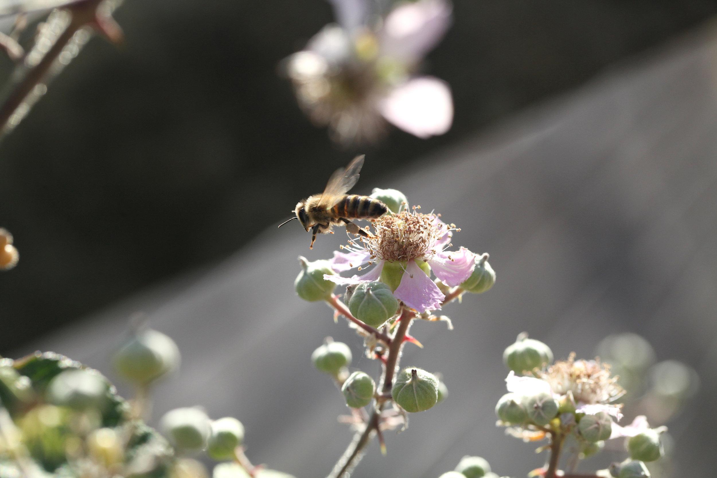 Eden Renewables Pollinator-Friendly Solar Farms 7.jpg