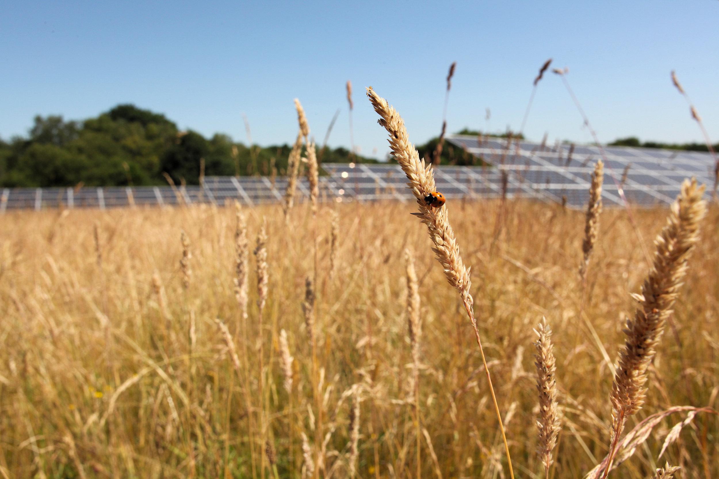 Eden Renewables Pollinator-Friendly Solar Farms 8.jpg