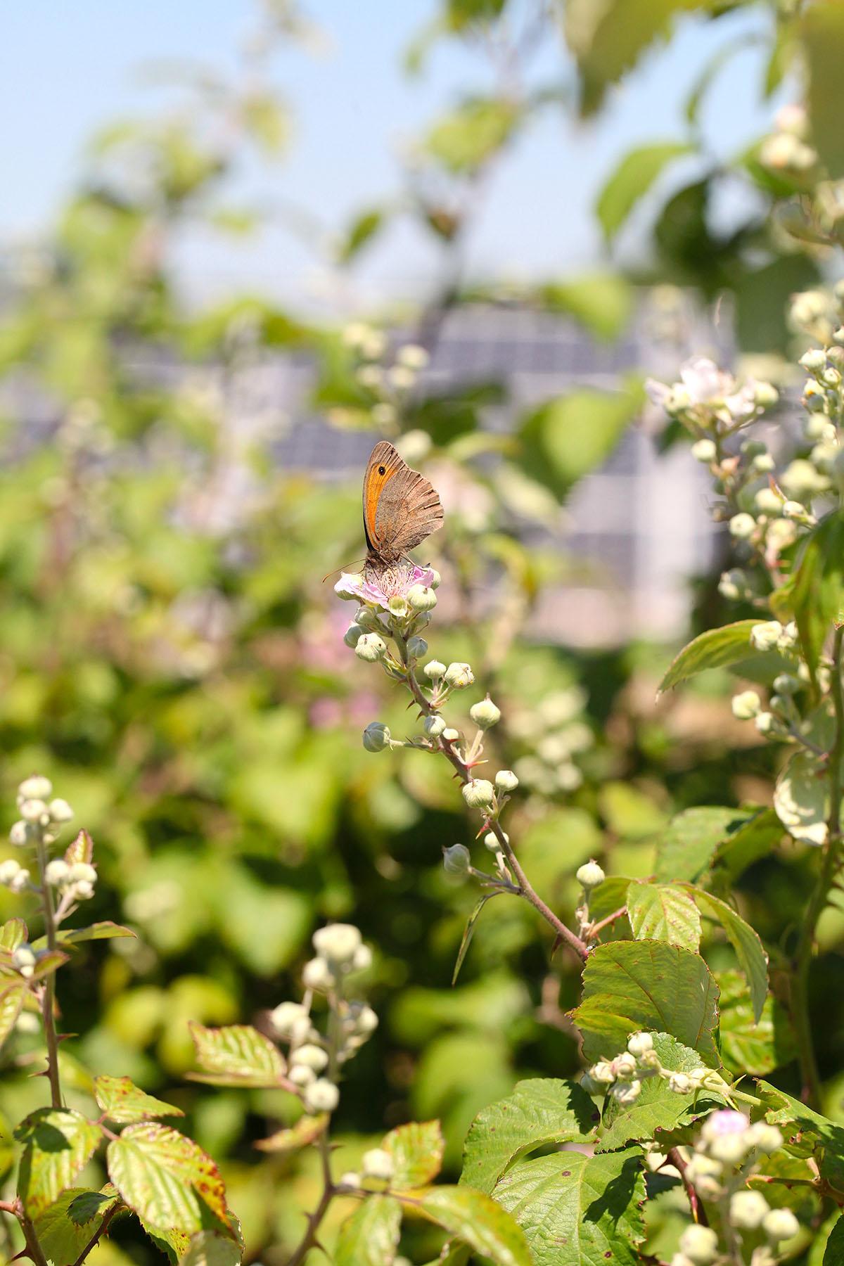 Eden Renewables Pollinator-Friendly Solar Farms 11.jpg
