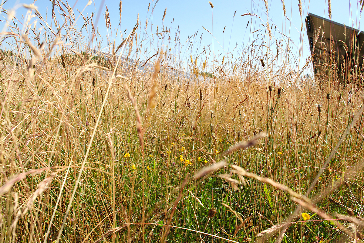 Eden Renewables Pollinator-Friendly Solar Farms 9.jpg
