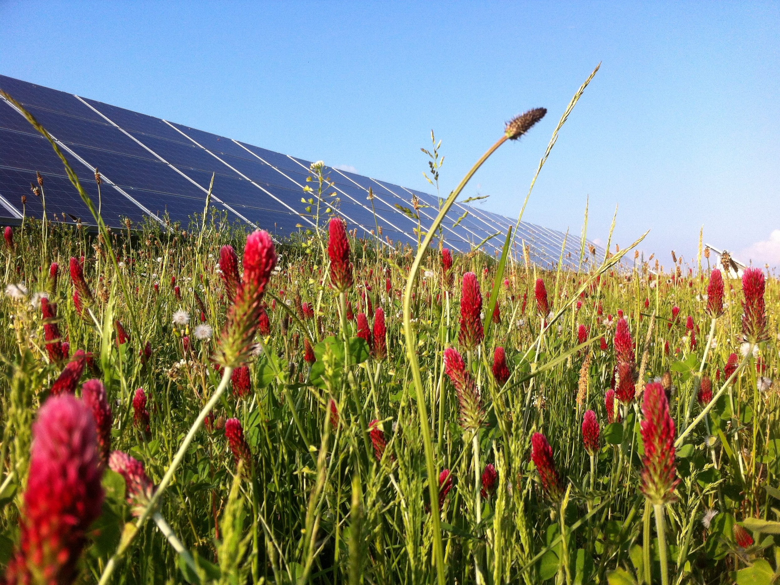Eden+Renewables+Pollinator-Friendly+Solar+Farms+14.jpg