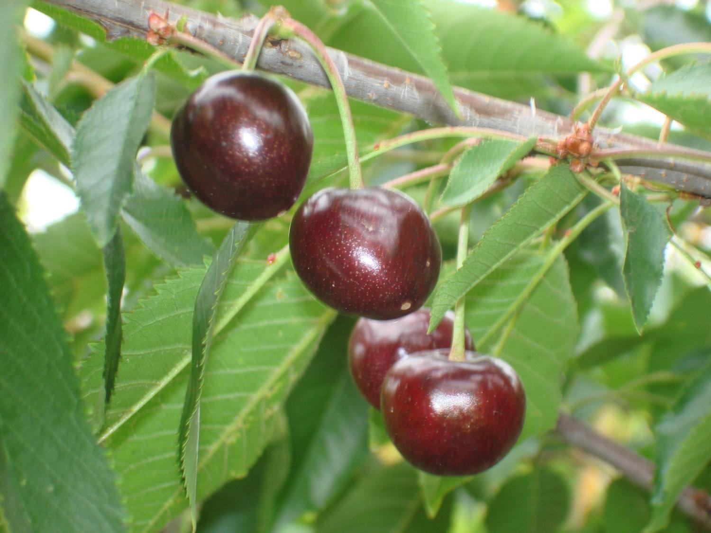 California Tropical Fruit Tree Nursery