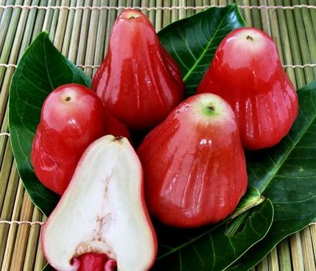 Wax Jambu (Red)