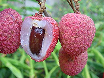 kaimana-lychee-2.jpg